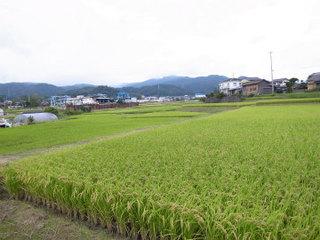 wakako_ricoh 391.jpg