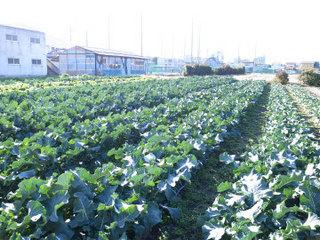 wakako_ricoh 629.jpg